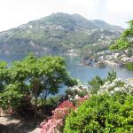 View of Ischia Port from Castle