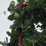 Macaws on the private beach