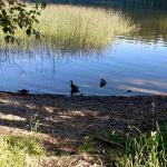 A little wildlife at Lake Padden