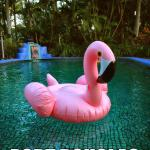 "Lounge around on ""Bruce"" the Flamingo."
