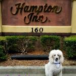 Hampton Inn sign. Pets not allowed. Service dogs welcomed