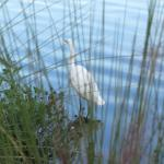 The variety of birds along the shores is amazing