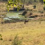 The Stanley and Livingstone at Victoria Falls Foto