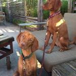 "Sweeney and Emery 'people watching"" at the Iron Horse Hotel - The Yard!"