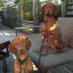 Sweeney and Emery love to watch customers, as well as the Birds, Bunnies and Bees!