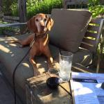 "Winston thinks this Zinfandel is for him - NOT!  We just ordered a Wood Oven Pizza!  ""The Wiscon"