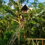 Yasur Camping Ground and Tree House