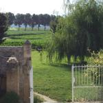 The grounds outside the main gate - basking in the early morning sun by the willow tree