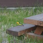 Bird at our picnic table