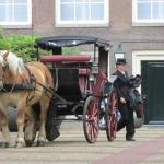 The carriage and horse