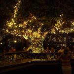 The Tree Bar at night.