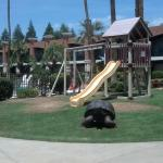 Rosedale Hotel play area and pool