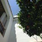 View from courtyard looking up at orange tree
