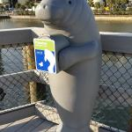 Tampa Electric Manatee Viewing Center Foto