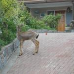 I saw a deer in the garden