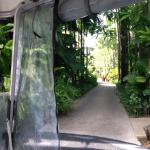 Driving through the grounds in a buggy. BeUtiful tropical gardens.