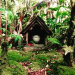 Volcano Rainforest Retreat Foto