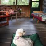 Rim Rock's Dogwood Cabinsの写真
