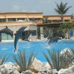 dolphin pool in hotel