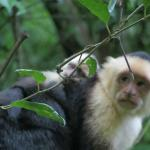 Photo of Manuel Antonio Nature Park & Wildlife Refuge