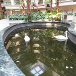 Elvin & Priscilla (in special inside hotel pool made for them) at Embassy Suites