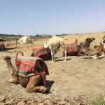 Photo of 4X4 Camel - Private Day Tours