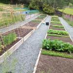 Veg patch in gardens