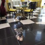 Lobby with residential doggie!