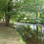 A walk along the Byes -  again just over the road, don't miss it.