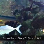 Aquarium in the Shark Pit Bar and Grill