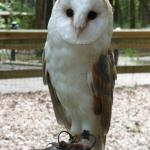 Carolina Raptor Center