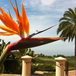 Some of the gorgeous scenery at Pelican Hill!