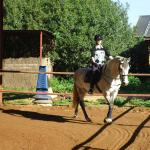 Riding arena and one of the beautiful horses