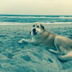 Hank at Atlantic Beach#AtlantisLodge
