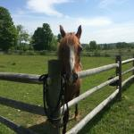 Billede af Mountain Horse Farm Bed and Breakfast and Spa