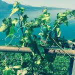Photo de Villa Lavaux Boutique B&B