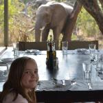 Dining with animals.