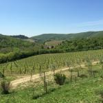 View over vineyard and hills