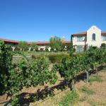 View of the Hotel from the vineyards
