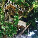 Treehouse Village Resort