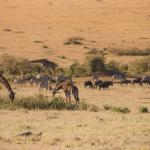 Abundant Wildlife on the Savannah at Basecamp Masai Mara