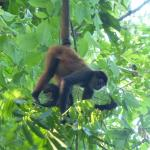 Spider Monkey family on the road