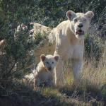 Our Cubs