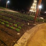 Dinning in the farms fruits and vegetables
