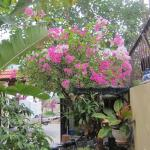 lush maintained gardens living up to name of Homestay
