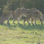 Cubs on the prowl