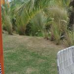 dry grass of the so called garden