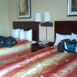 BEST WESTERN University Hotel Boston-Brighton照片