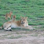 Simba Africa Expeditions Day Tours