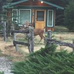 Cabins with wildlife